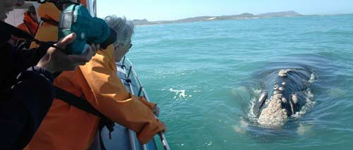 Whale watching in Gansbaai